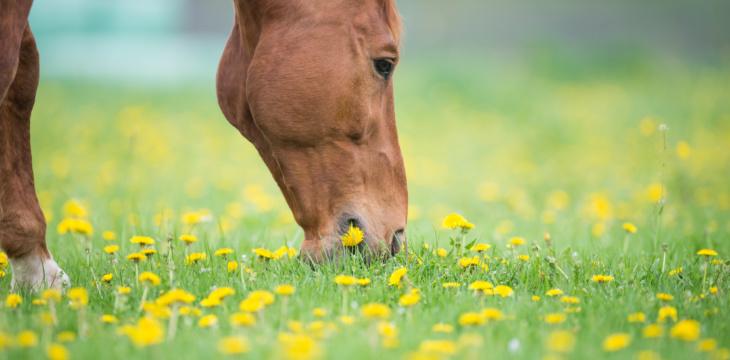 """Werbung/Testbericht von """"Natur-Pferd Hepatic"""""""